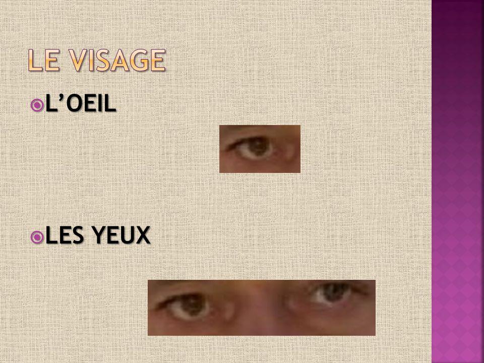 LOEIL LOEIL LES YEUX LES YEUX