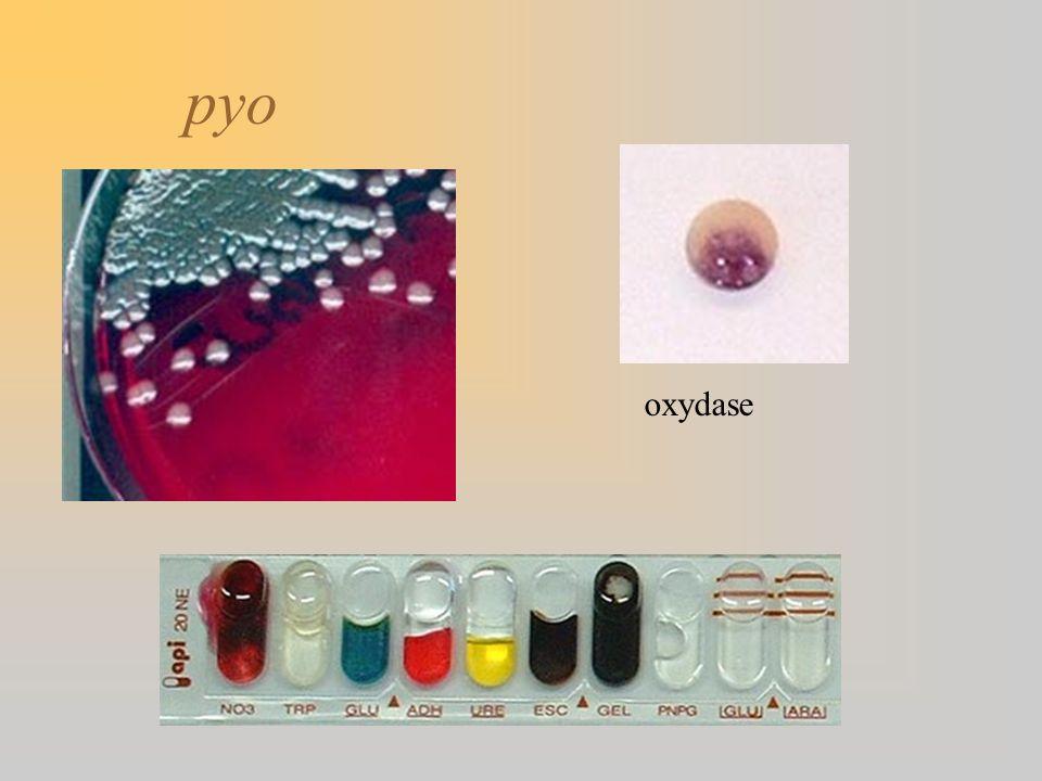 oxydase