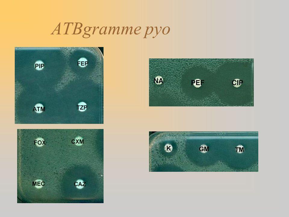 ATBgramme pyo