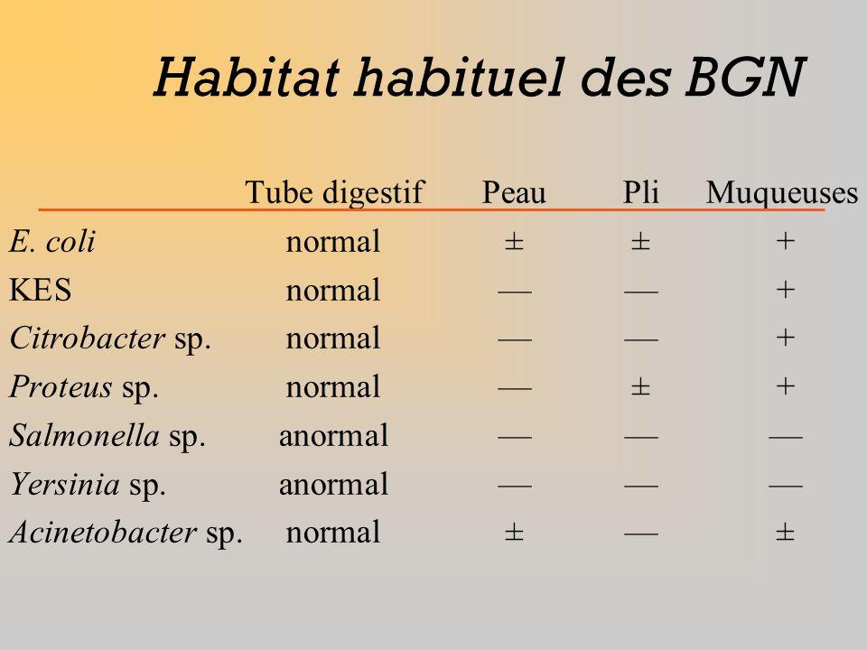 Habitat habituel des BGN Tube digestifPeauPliMuqueuses E. colinormal±±+ KESnormal+ Citrobacter sp.normal+ Proteus sp.normal±+ Salmonella sp.anormal Ye