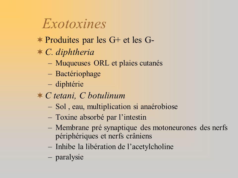 Exotoxines Produites par les G+ et les G- C. diphtheria –Muqueuses ORL et plaies cutanés –Bactériophage –diphtérie C tetani, C botulinum –Sol, eau, mu