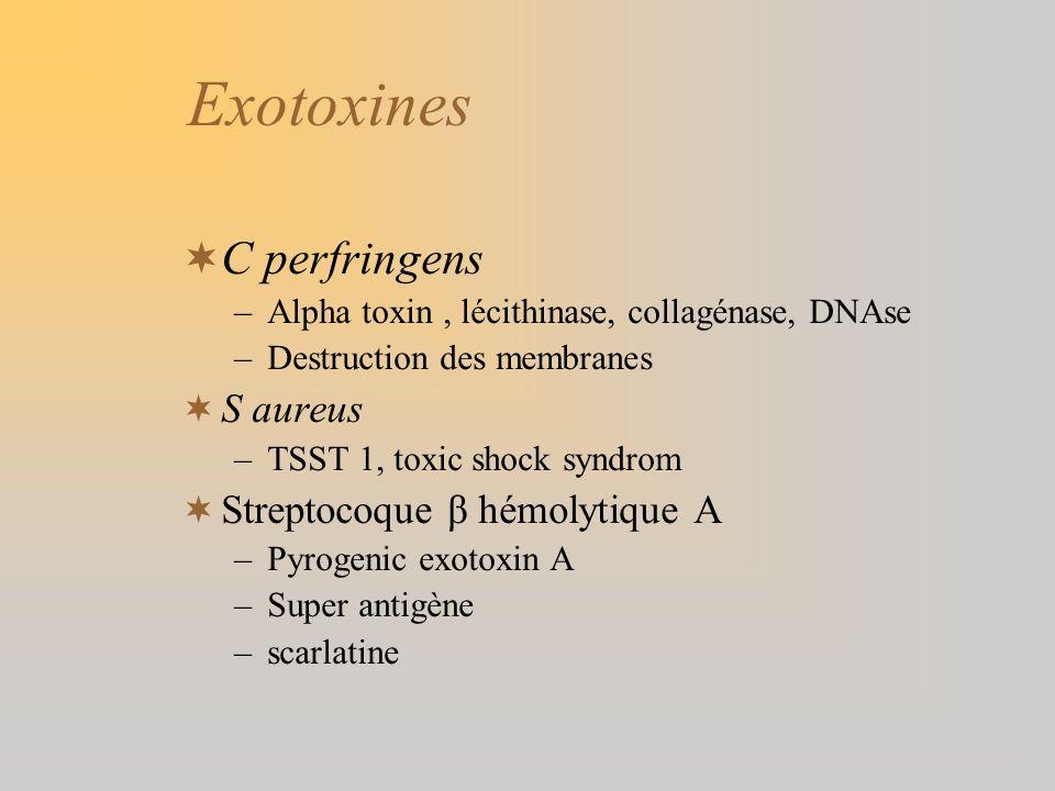 Exotoxines C perfringens –Alpha toxin, lécithinase, collagénase, DNAse –Destruction des membranes S aureus –TSST 1, toxic shock syndrom Streptocoque β