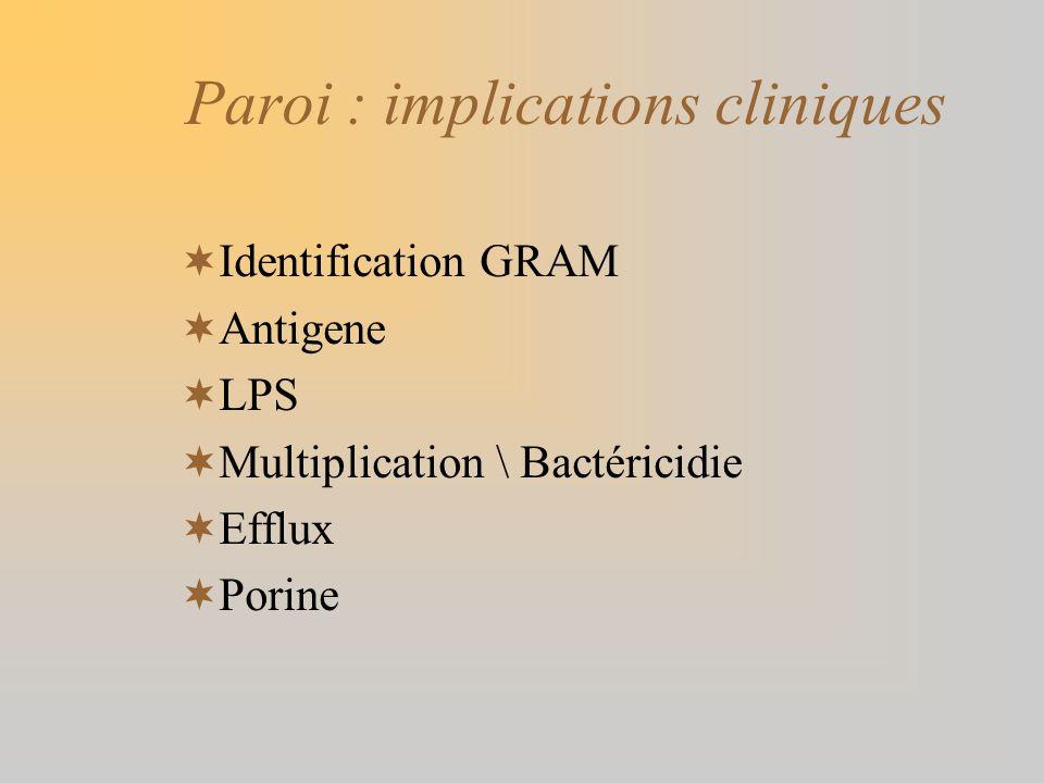 Paroi : implications cliniques Identification GRAM Antigene LPS Multiplication \ Bactéricidie Efflux Porine