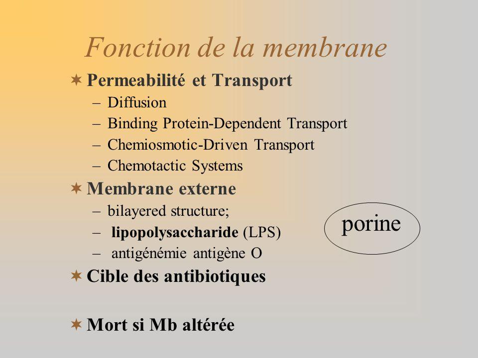 Fonction de la membrane Permeabilité et Transport –Diffusion –Binding Protein-Dependent Transport –Chemiosmotic-Driven Transport –Chemotactic Systems