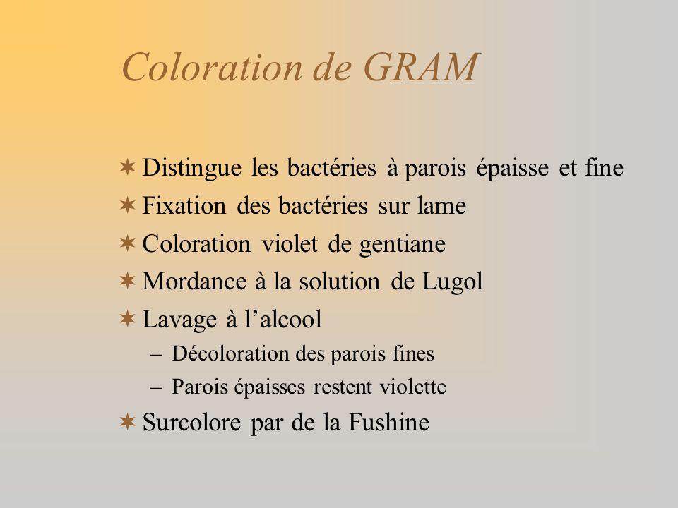 Coloration de GRAM Distingue les bactéries à parois épaisse et fine Fixation des bactéries sur lame Coloration violet de gentiane Mordance à la soluti
