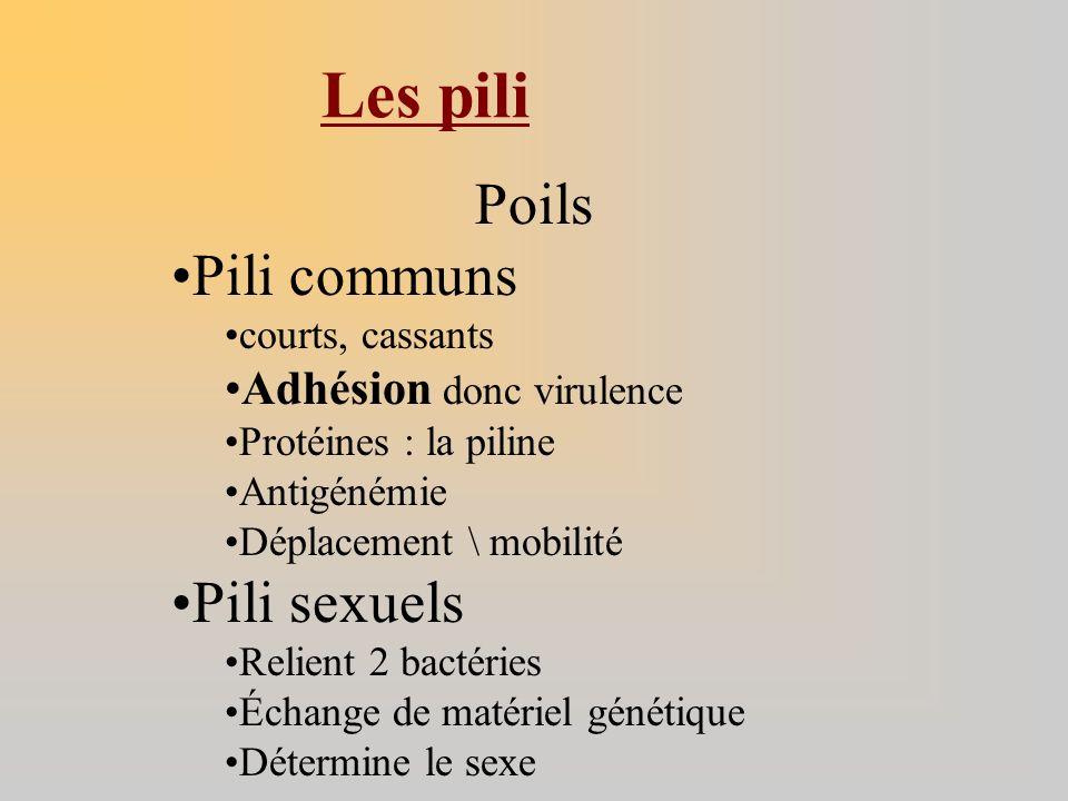 Poils Pili communs courts, cassants Adhésion donc virulence Protéines : la piline Antigénémie Déplacement \ mobilité Pili sexuels Relient 2 bactéries