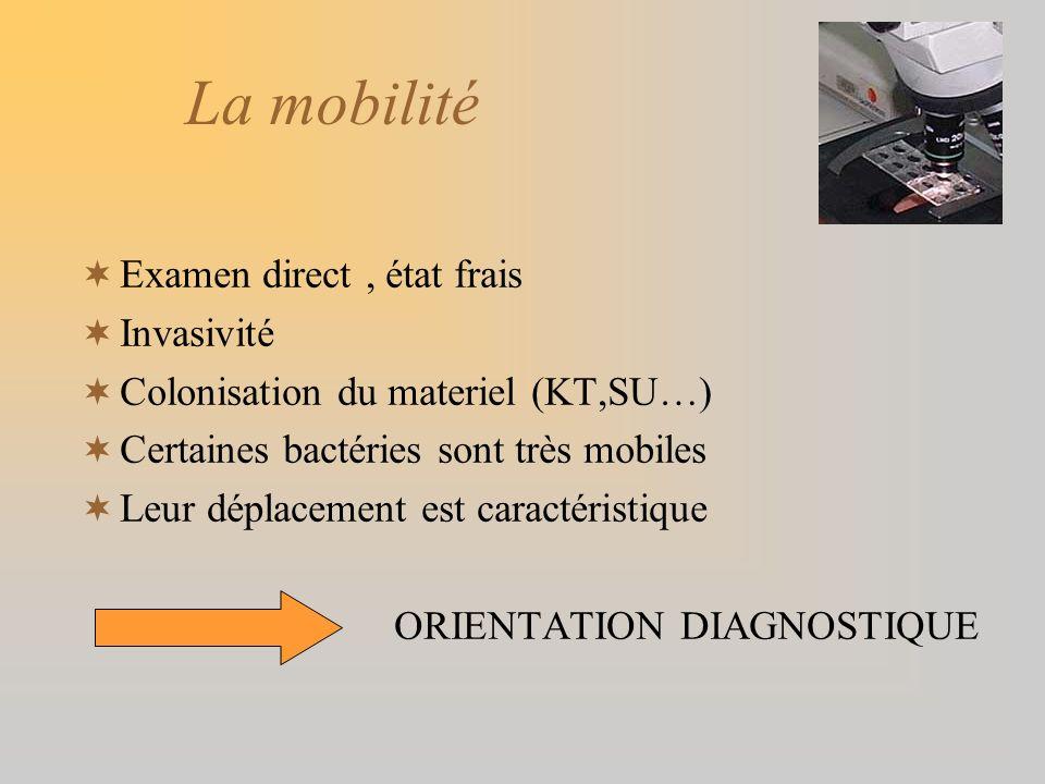 La mobilité Examen direct, état frais Invasivité Colonisation du materiel (KT,SU…) Certaines bactéries sont très mobiles Leur déplacement est caractér