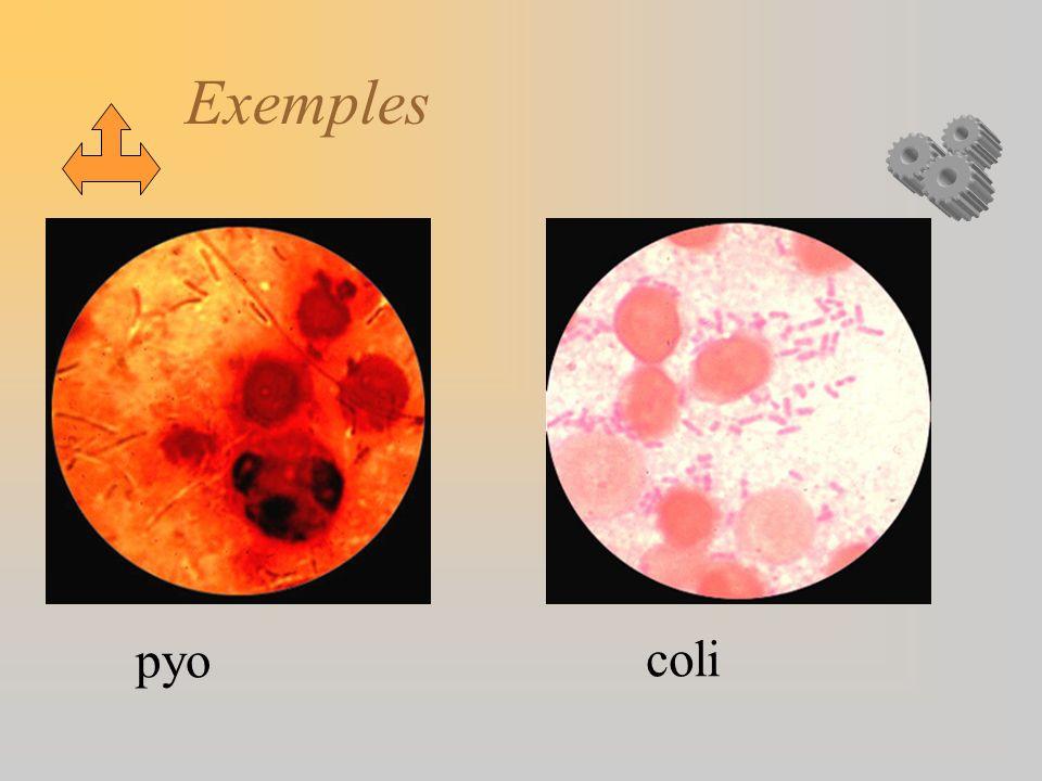 Exemples pyo coli