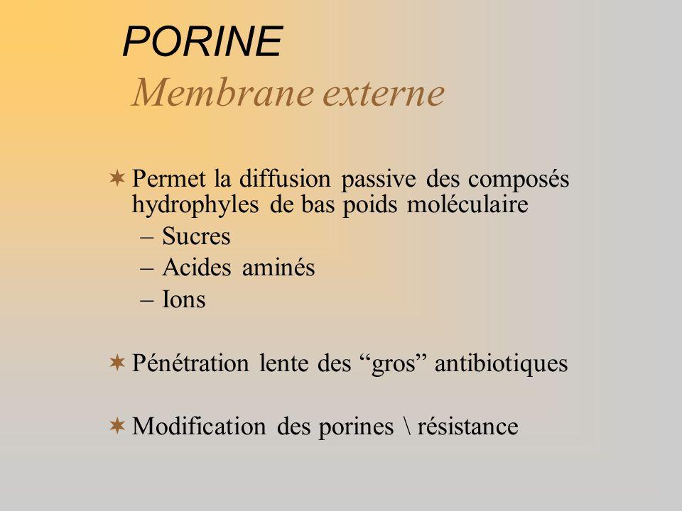 PORINE Membrane externe Permet la diffusion passive des composés hydrophyles de bas poids moléculaire –Sucres –Acides aminés –Ions Pénétration lente d