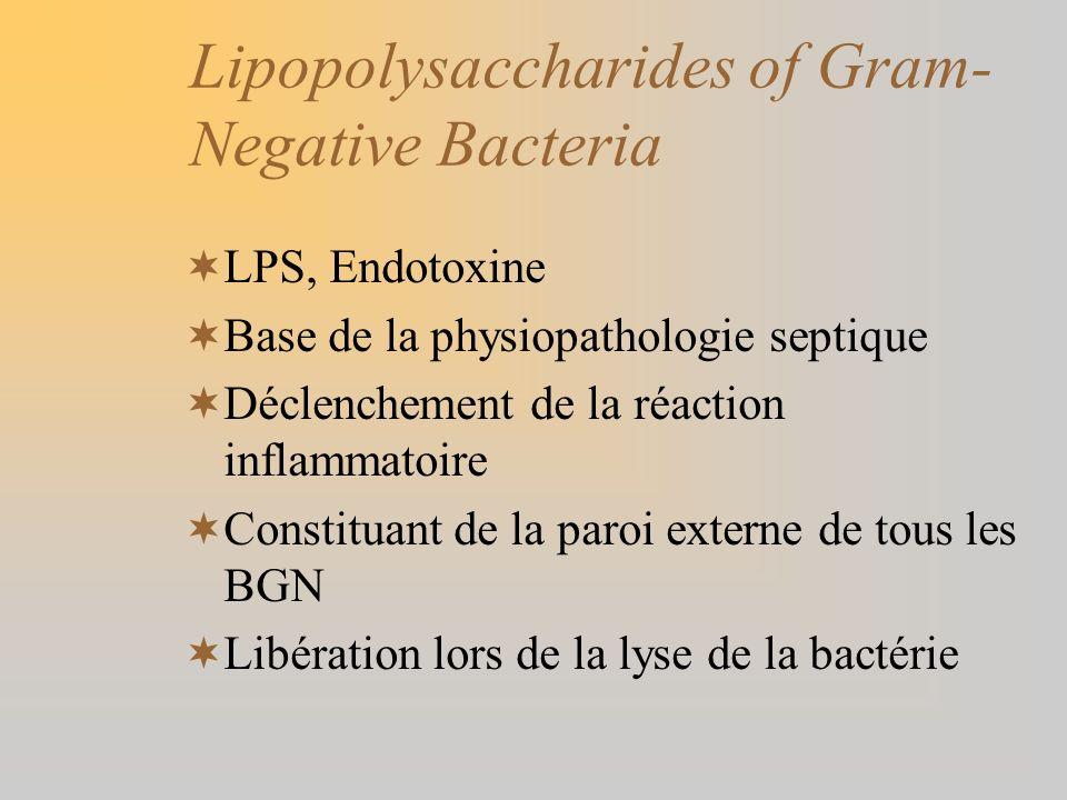 Lipopolysaccharides of Gram- Negative Bacteria LPS, Endotoxine Base de la physiopathologie septique Déclenchement de la réaction inflammatoire Constit