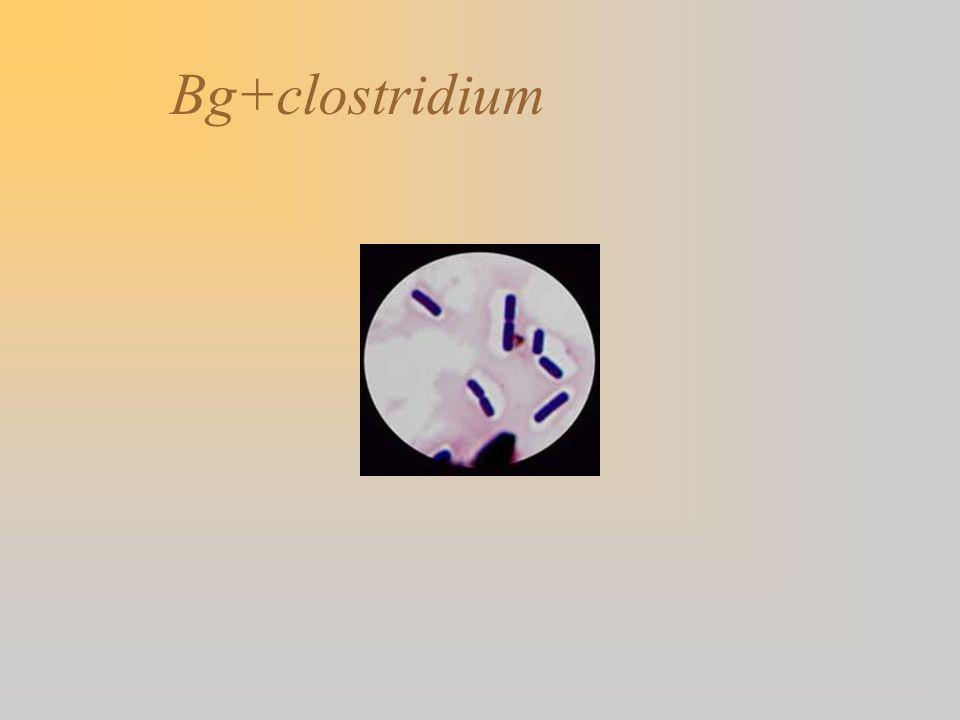 Bg+clostridium