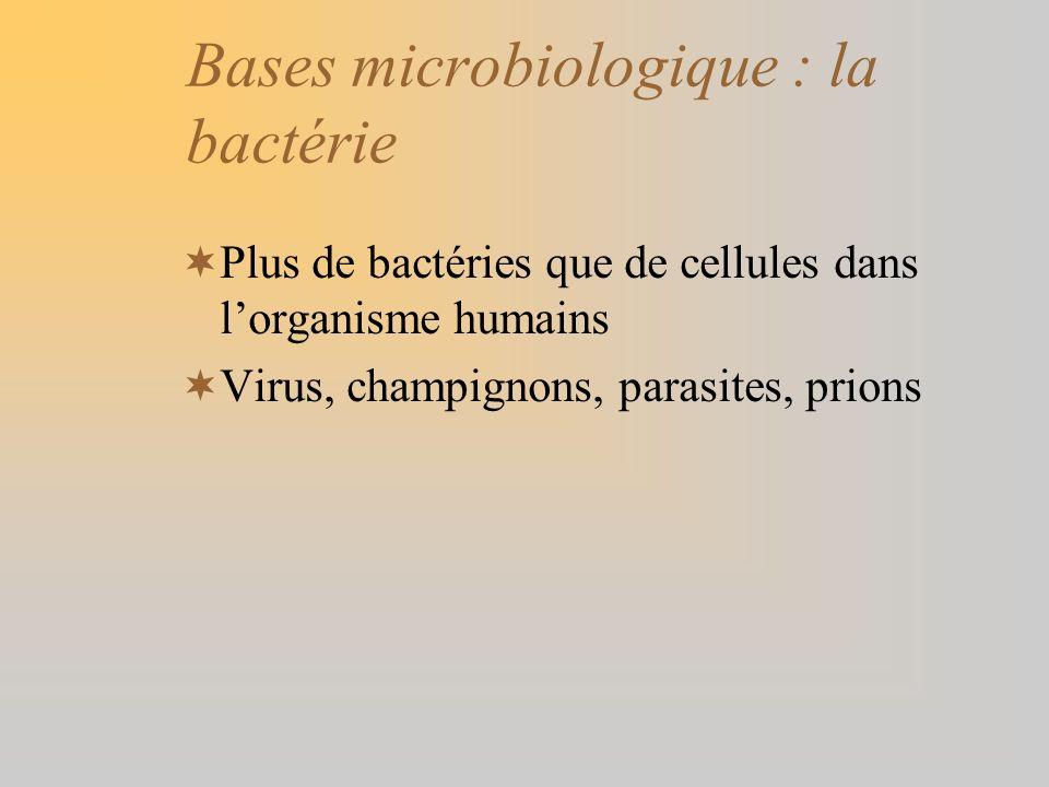Bases microbiologique : la bactérie Plus de bactéries que de cellules dans lorganisme humains Virus, champignons, parasites, prions