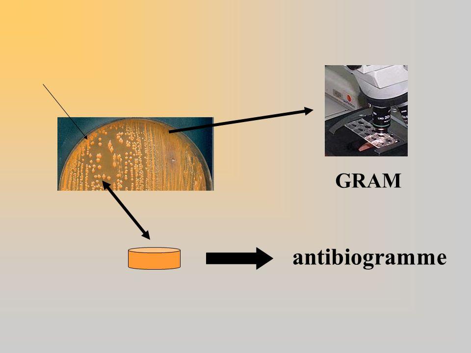 antibiogramme GRAM