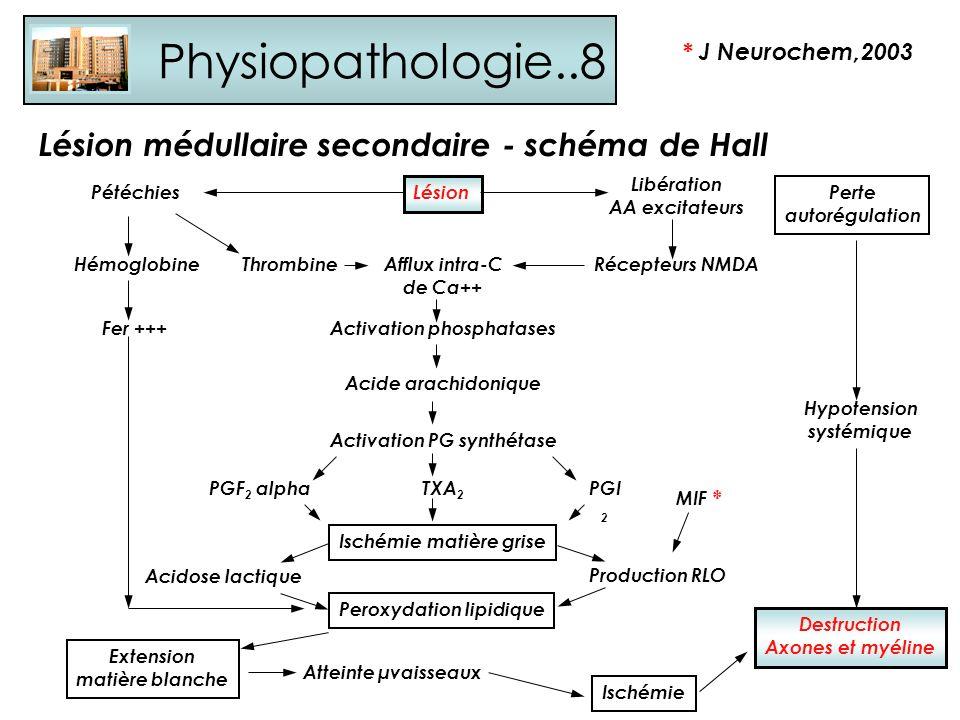 Physiopathologie..8 Lésion médullaire secondaire - schéma de Hall Lésion Pétéchies Hémoglobine Fer +++ ThrombineAfflux intra-C de Ca++ Libération AA e
