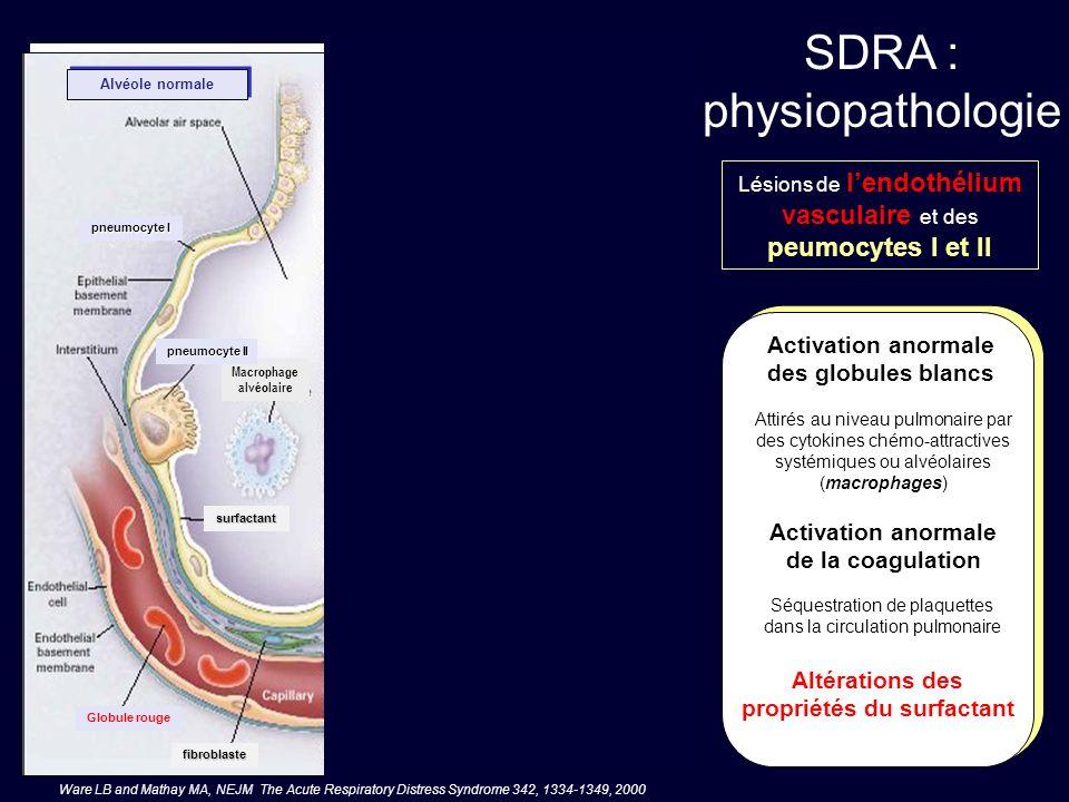 SDRA : physiopathologie Lésions de lendothélium vasculaire et des peumocytes I et II Rôle aggravant potentiel de la ventilation mécanique Lhyperventilation mécanique ( V T 40 ml.kg -1 ) provoque en œdème pulmonaire lésionnel chez des animaux à poumons sains oedème riche en proteïnes Macrophage alvéolaire pneumocyte II fibroblaste surfactant fibroblaste plaquettes Globule blanc Globule rouge pneumocyte I en apoptose pneumocyte I Lésions alvéolaires à la phase aiguë Alvéole normale Globule rouge Des V T et des pressions intrathoraciques élevés provoquent des lésions de distension bronchioloalvéolaire lorsque la perte daération du SDRA est de type focal Ware LB and Mathay MA, NEJM The Acute Respiratory Distress Syndrome 342, 1334-1349, 2000