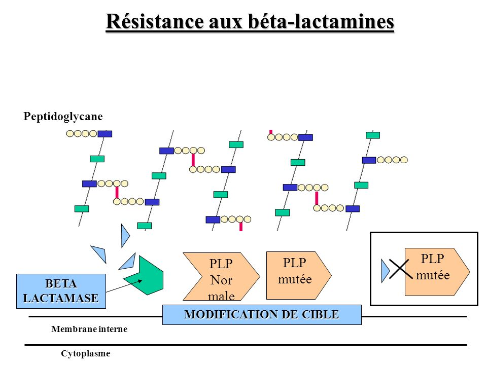 PLP Nor male BETA LACTAMASE Peptidoglycane Membrane interne Cytoplasme PLP mutée MODIFICATION DE CIBLE Résistance aux béta-lactamines PLP mutée