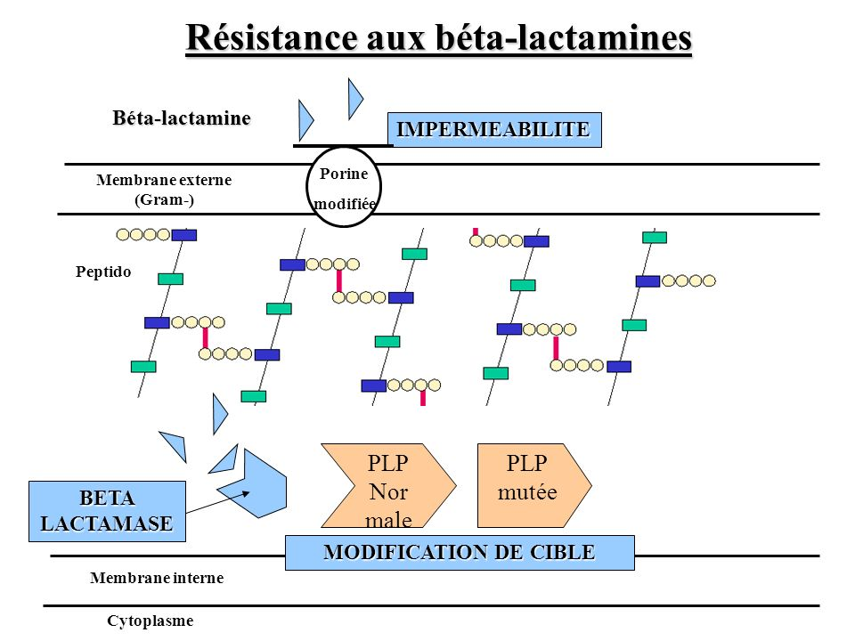 PLP Nor male Membrane externe (Gram-) IMPERMEABILITE BETA LACTAMASE Peptido Membrane interne Cytoplasme PLP mutée MODIFICATION DE CIBLE Porine modifié
