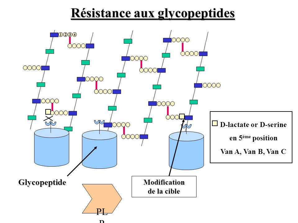 PL P Glycopeptide Modification de la cible Résistance aux glycopeptides D-lactate or D-serine en 5 ème position Van A, Van B, Van C