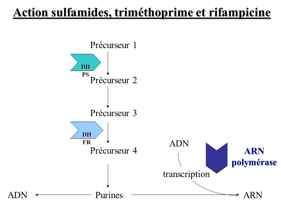 Précurseur 2 Précurseur 1 Précurseur 3 Purines DH PS DH PS Précurseur 4 DH FR DH FR ARNADN transcription ARN polymérase Action sulfamides, triméthopri