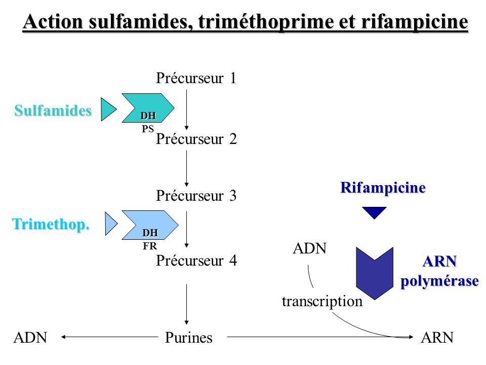 Précurseur 2 Précurseur 1 Précurseur 3 Purines DH PS DH PS Précurseur 4 DH FR DH FR ARNADN transcription ARN polymérase Rifampicine Sulfamides Trimeth