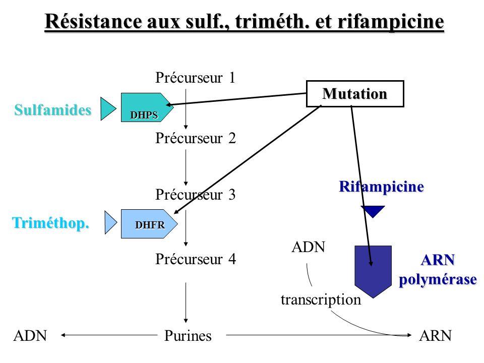 Précurseur 2 Précurseur 1 Précurseur 3 Purines DHPS DHPS Précurseur 4 DHFR DHFR ARNADN transcription ARN polymérase Rifampicine Sulfamides Triméthop.