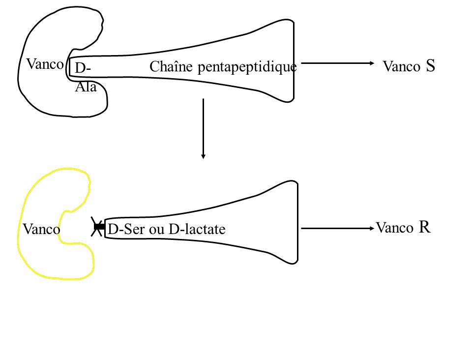 D- Ala Vanco R Vanco S Vanco D-Ser ou D-lactateVanco Chaîne pentapeptidique