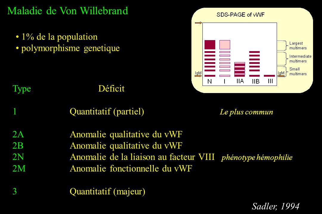 Maladie de Von Willebrand 1% de la population polymorphisme genetique TypeDéficit 1Quantitatif (partiel) Le plus commun 2AAnomalie qualitative du vWF