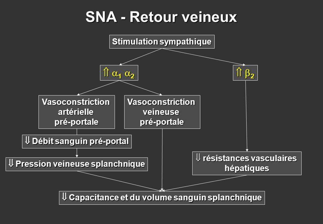 SNA - Retour veineux Vasoconstrictionartériellepré-portale Pression veineuse splanchnique Pression veineuse splanchnique Capacitance et du volume sang
