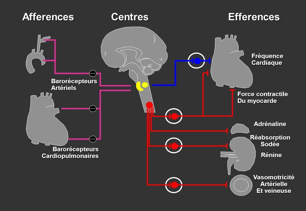 AfferencesEfferencesCentres BarorécepteursArtériels BarorécepteursCardiopulmonaires FréquenceCardiaque Force contractile Du myocarde AdrénalineRéabsor
