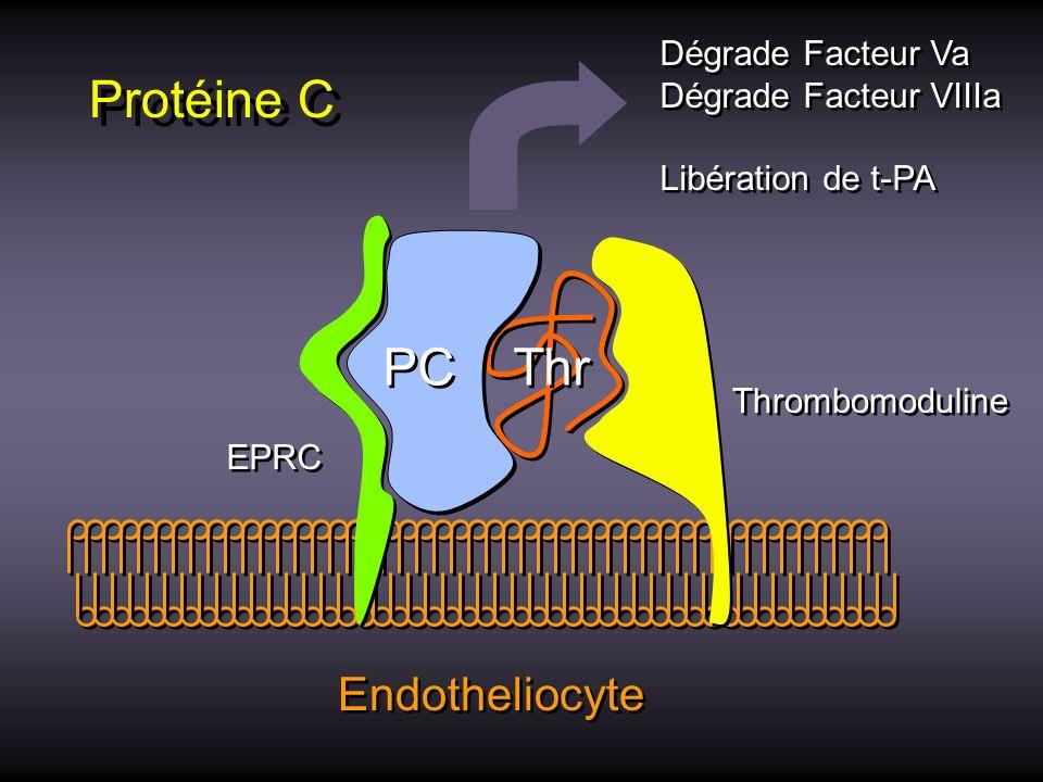 Protéine C Thr PC EPRC Thrombomoduline Endotheliocyte Dégrade Facteur Va Dégrade Facteur VIIIa Libération de t-PA Dégrade Facteur Va Dégrade Facteur V