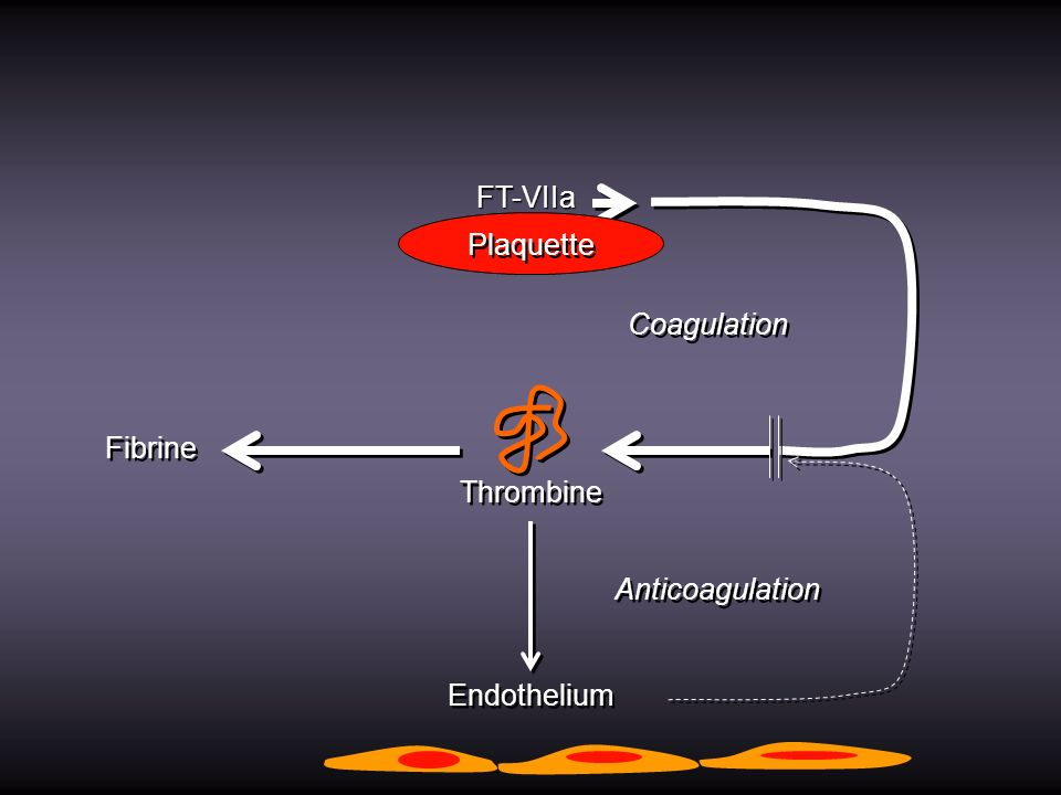 Thrombine Endothelium Coagulation Anticoagulation FT-VIIa Plaquette Fibrine