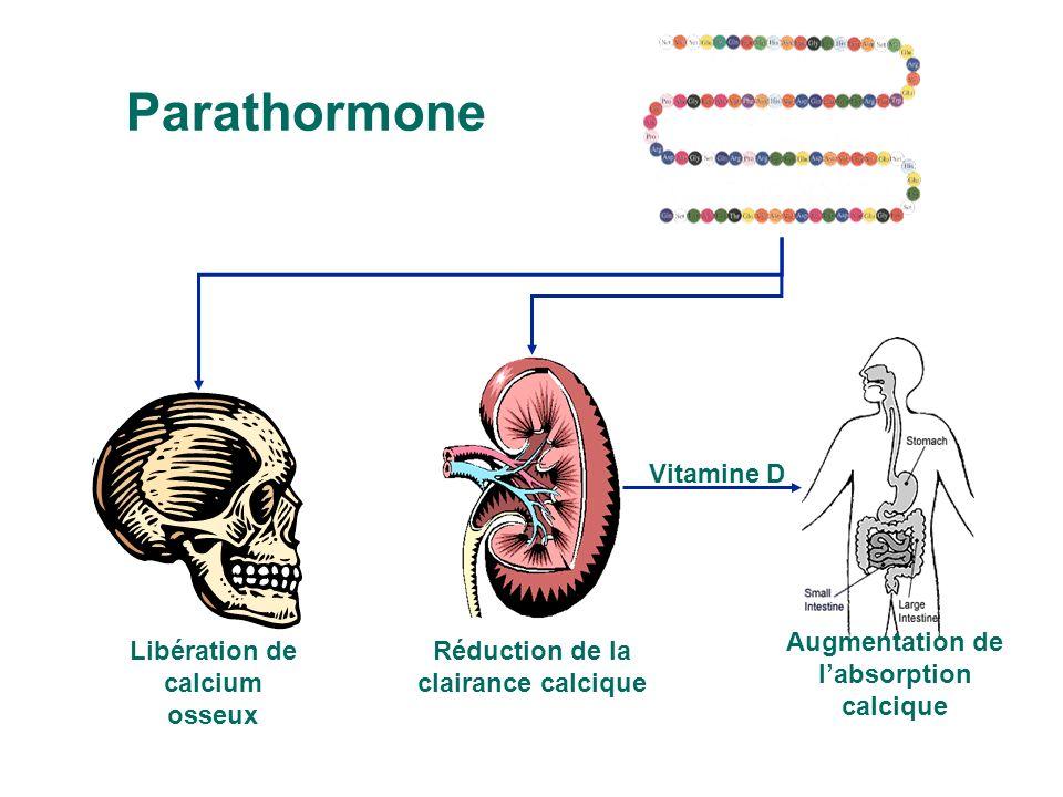 Parathormone Vitamine D Réduction de la clairance calcique Libération de calcium osseux Augmentation de labsorption calcique