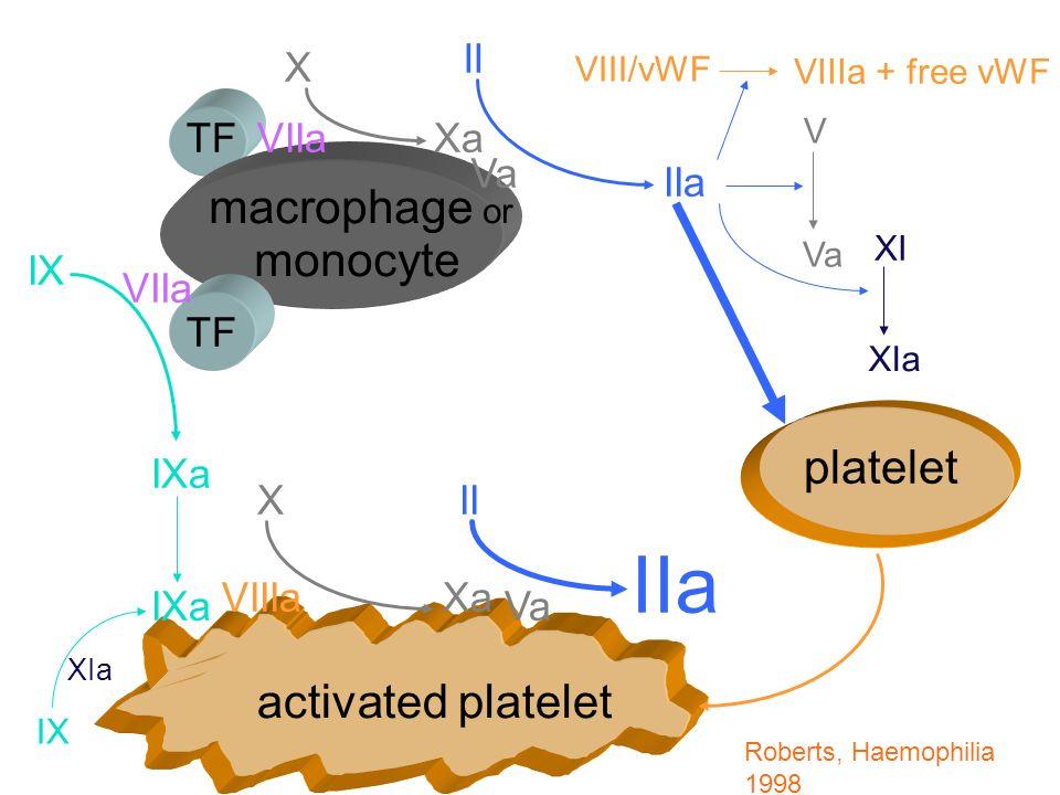 TF monocyte activated platelet platelet VIIa IX VIIa IXa VIIIa X X Xa Va II IIa V Va VIII/vWF VIIIa + free vWF Xa Va IIa II Roberts, Haemophilia 1998