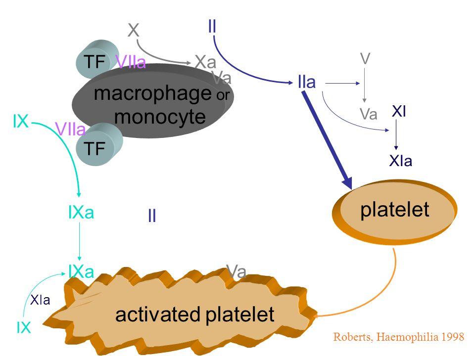 TF monocyte activated platelet platelet VIIa IX VIIa IXa X Xa Va II IIa V Va Roberts, Haemophilia 1998 macrophage or XI XIa IX XIa II
