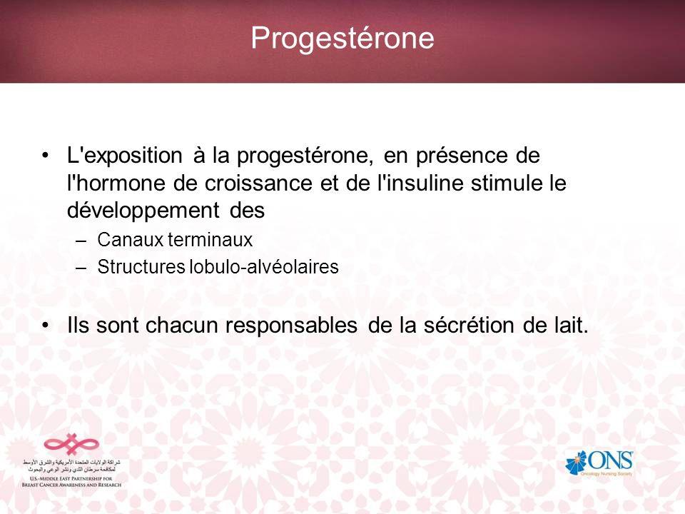 Progestérone L'exposition à la progestérone, en présence de l'hormone de croissance et de l'insuline stimule le développement des –Canaux terminaux –S