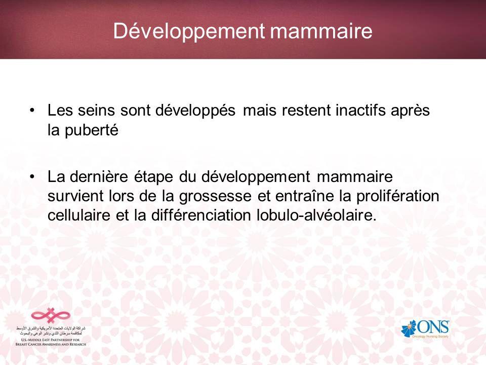 Développement mammaire Les seins sont développés mais restent inactifs après la puberté La dernière étape du développement mammaire survient lors de l