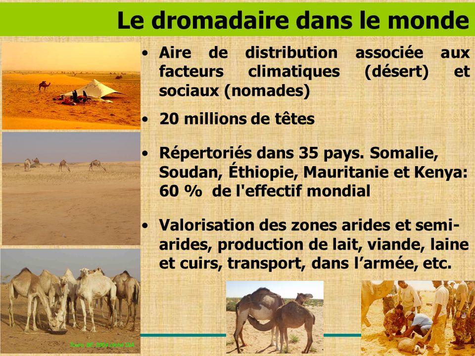 Le dromadaire dans le monde Aire de distribution associée aux facteurs climatiques (désert) et sociaux (nomades) 20 millions de têtes Répertoriés dans