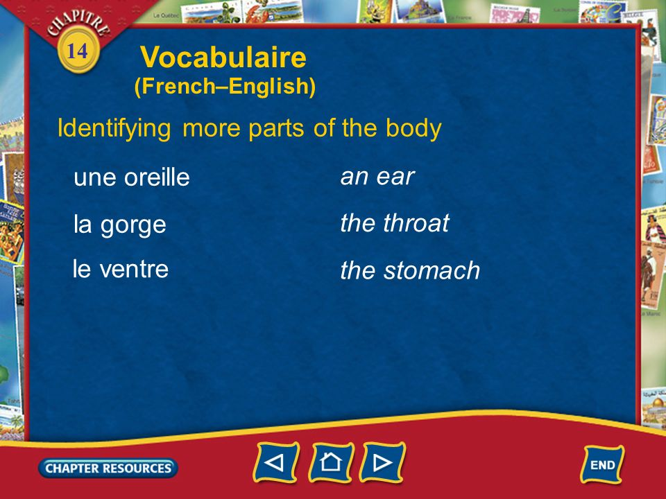 14 Identifying more parts of the body the head la tête un œil, des yeux le nez an eye, eyes the nose la bouche the mouth Vocabulaire (French–English)