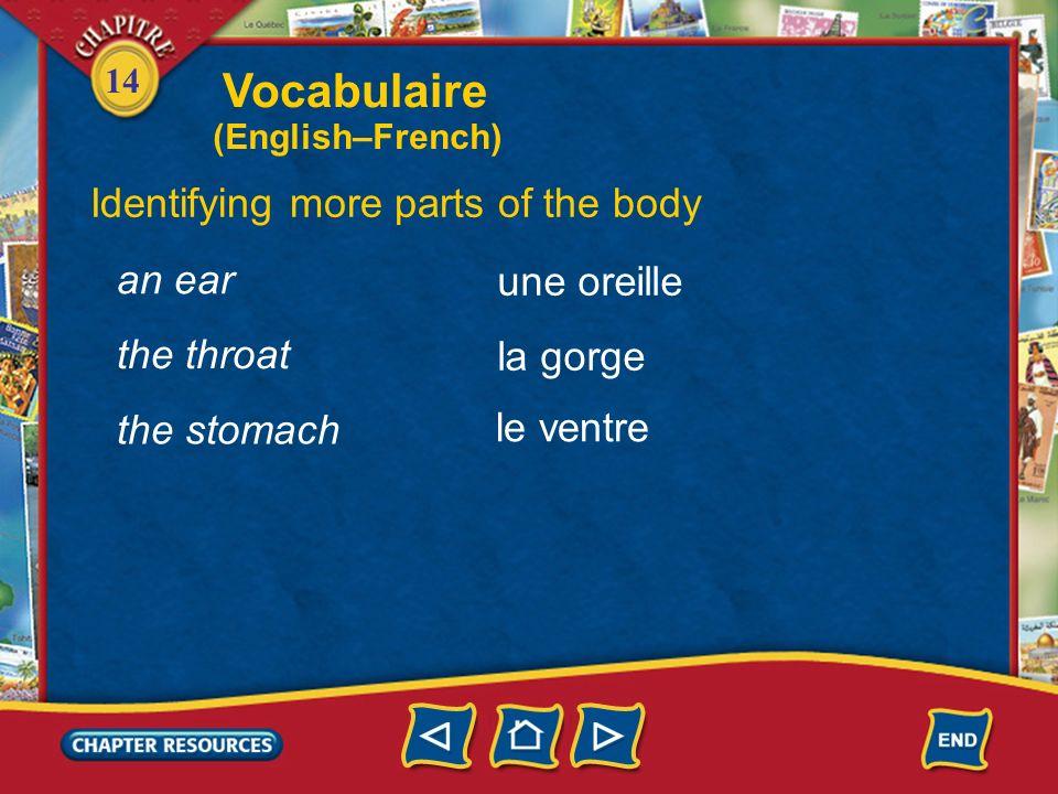 14 Identifying more parts of the body the head la tête un œil, des yeux le nez an eye, eyes the nose la bouche the mouth Vocabulaire (English–French)