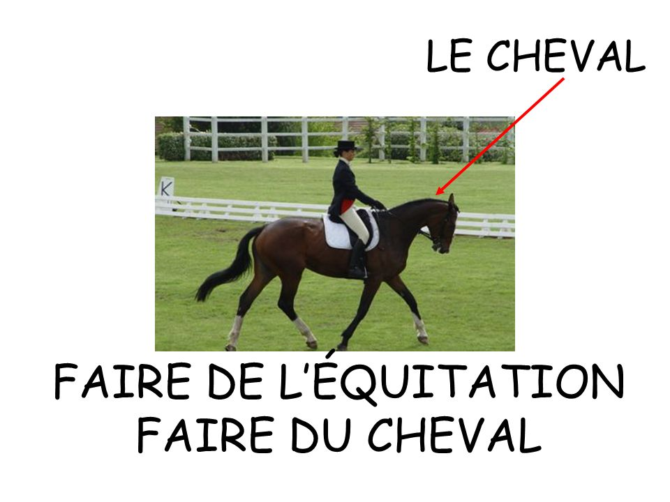 LE CHEVAL FAIRE DE LÉQUITATION FAIRE DU CHEVAL