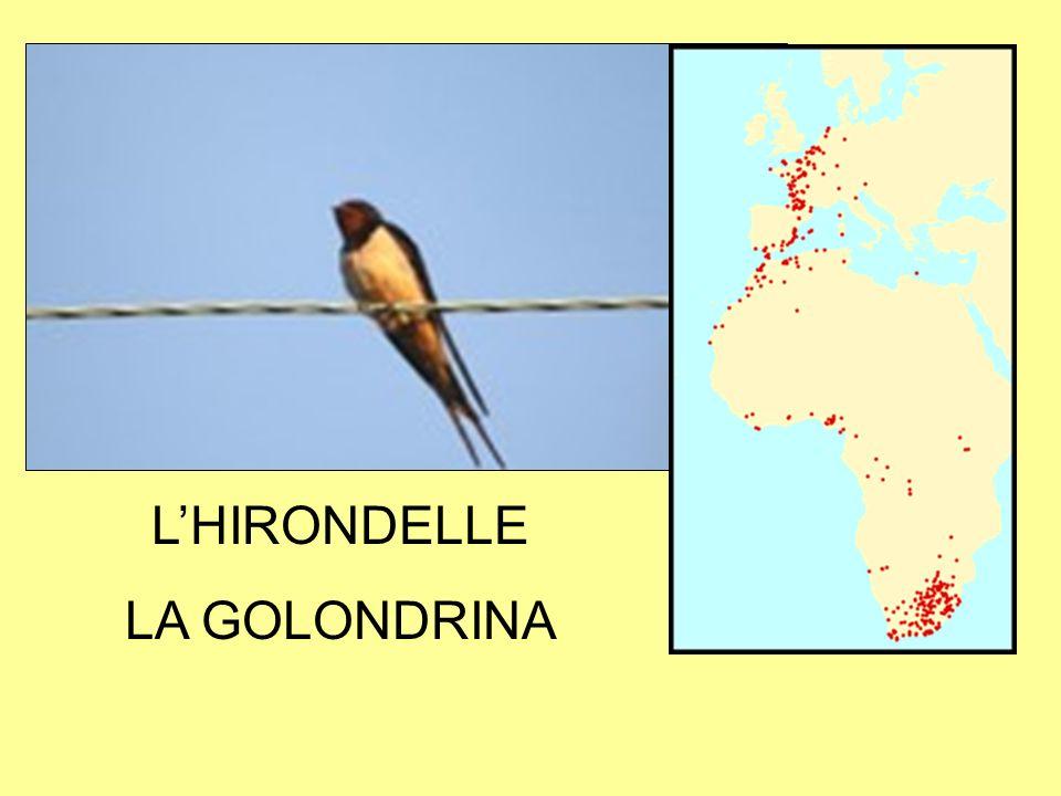 LHIRONDELLE LA GOLONDRINA