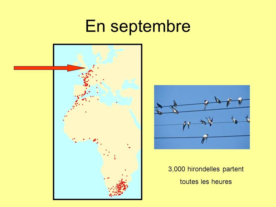 En septembre 3,000 hirondelles partent toutes les heures