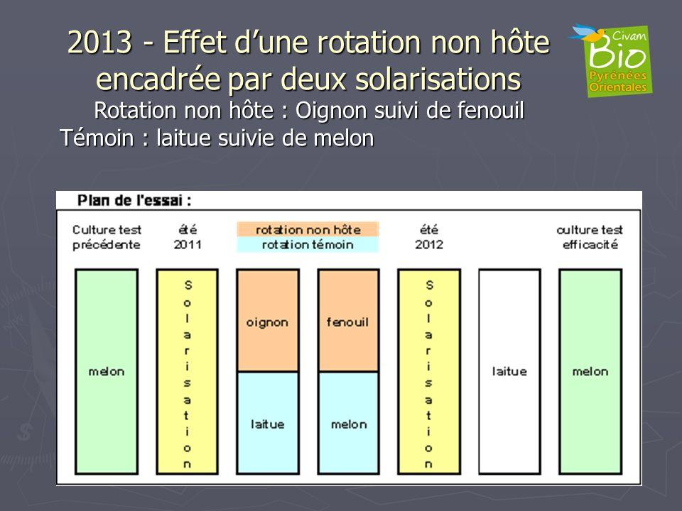 2013 - Effet dune rotation non hôte encadrée par deux solarisations Rotation non hôte : Oignon suivi de fenouil Témoin : laitue suivie de melon