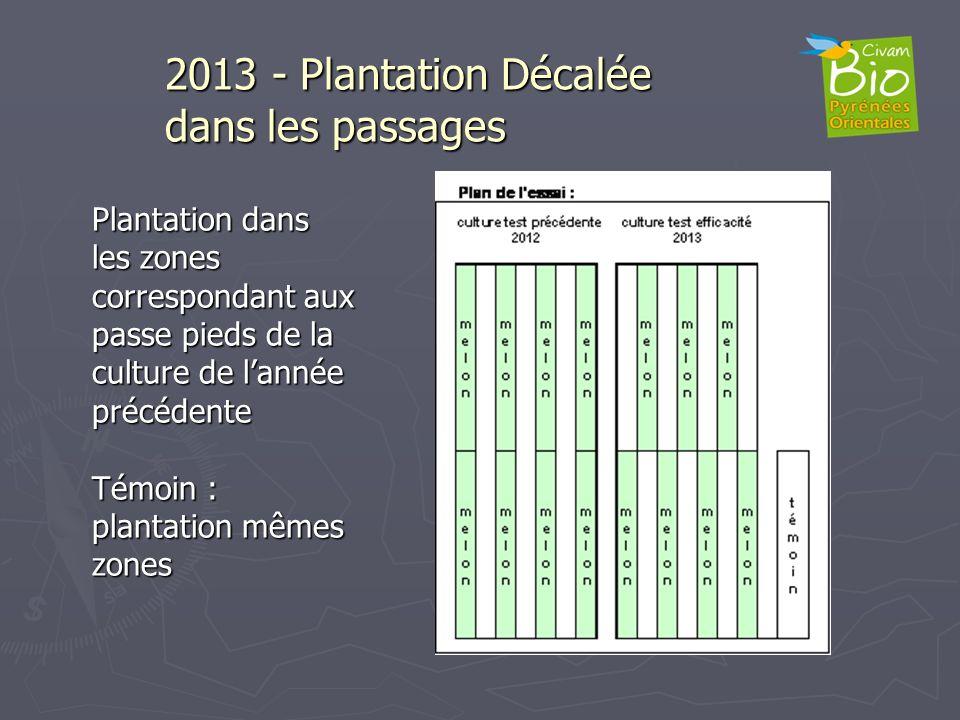 Plantation dans les zones correspondant aux passe pieds de la culture de lannée précédente Témoin : plantation mêmes zones 2013 - Plantation Décalée d