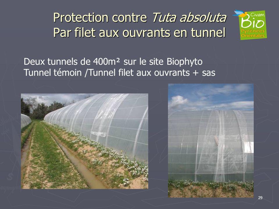 Protection contre Tuta absoluta Par filet aux ouvrants en tunnel 29 Deux tunnels de 400m² sur le site Biophyto Tunnel témoin /Tunnel filet aux ouvrant