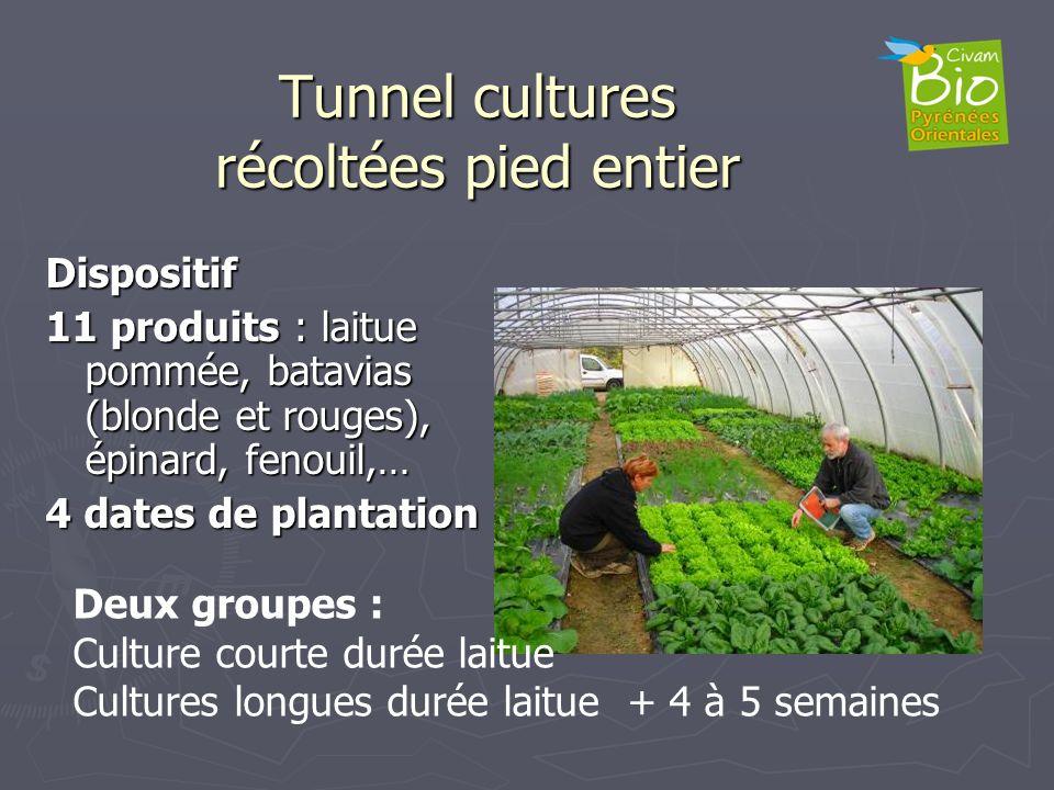 Tunnel cultures récoltées pied entier Dispositif 11 produits : laitue pommée, batavias (blonde et rouges), épinard, fenouil,… 4 dates de plantation De