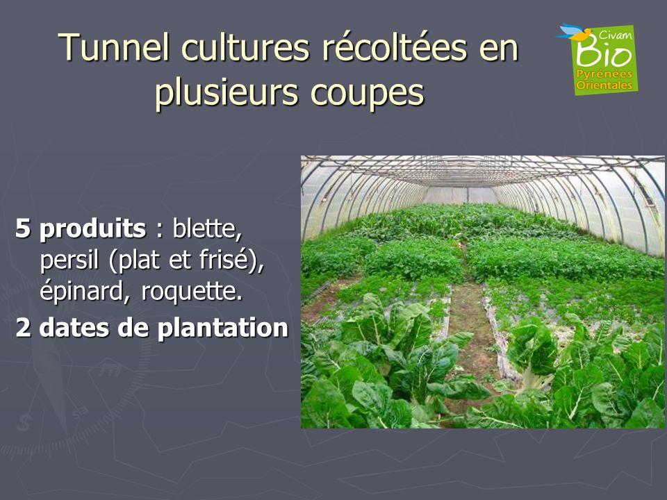 Tunnel cultures récoltées en plusieurs coupes 5 produits : blette, persil (plat et frisé), épinard, roquette. 2 dates de plantation