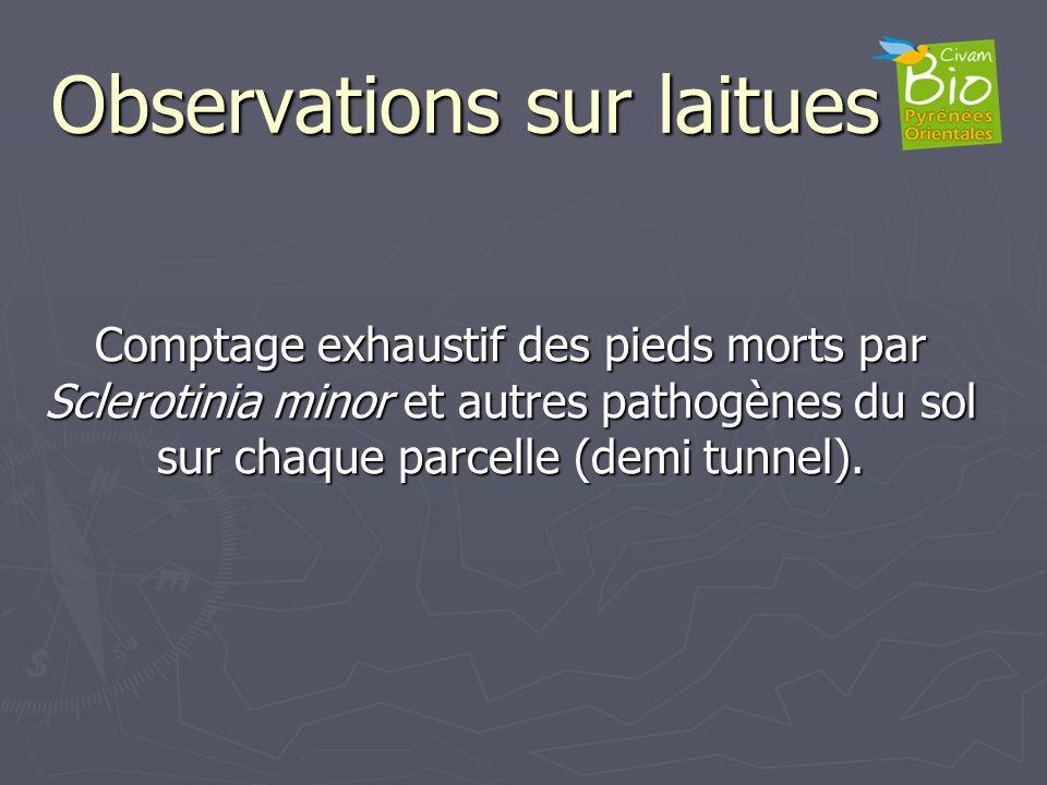 Observations sur laitues Comptage exhaustif des pieds morts par Sclerotinia minor et autres pathogènes du sol sur chaque parcelle (demi tunnel).