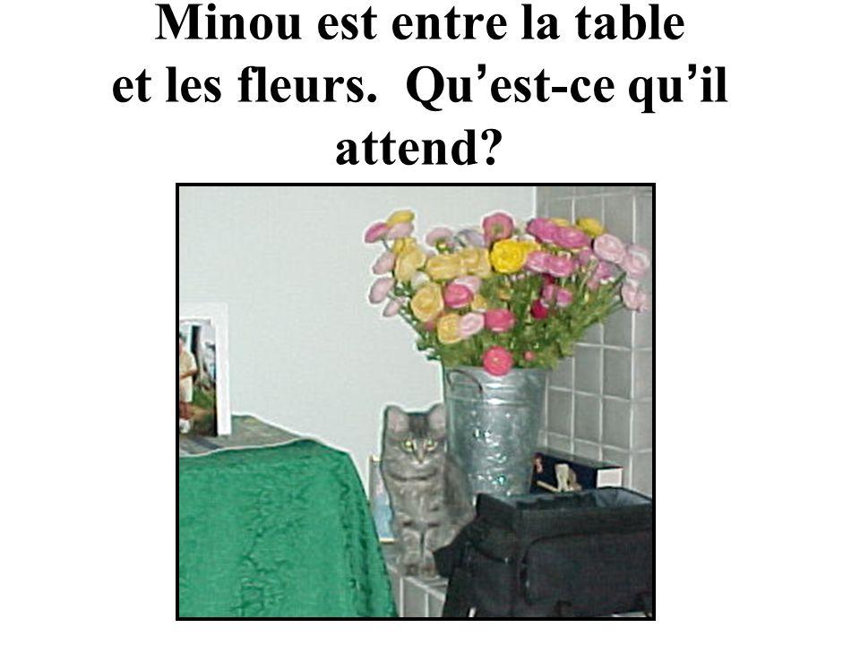Minou est entre la table et les fleurs. Qu est-ce qu il attend
