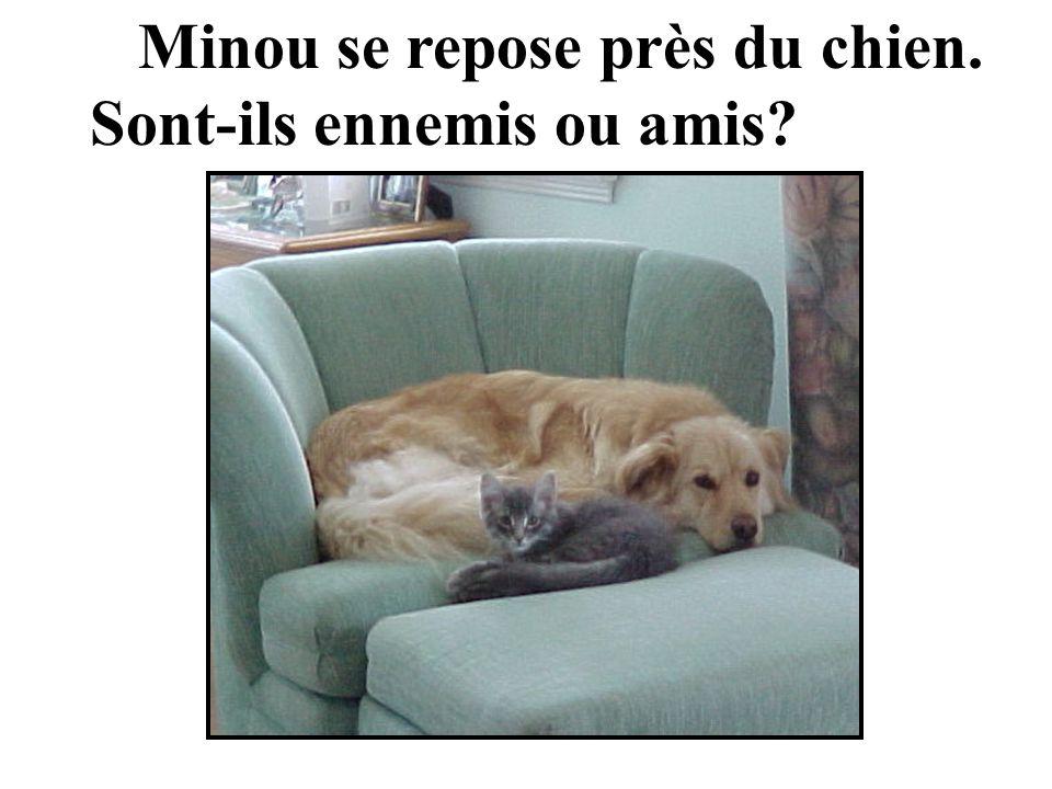 Minou se repose près du chien. Sont-ils ennemis ou amis?